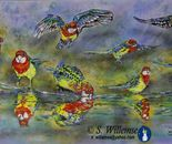 Eastern Rosella reflections