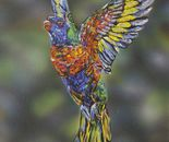 """Hope"" Rainbow Lorikeet"