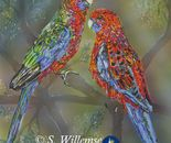 Crimson Rosellas: Father and son