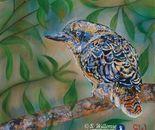 Grumpy Kookaburra