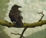 Le gros oiseau noir