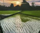Sun & rice
