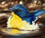 Blue Bird Bathing