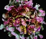 Pink Hydrangea and brain
