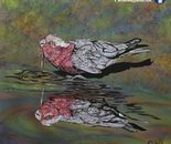Galah reflection: Precious water