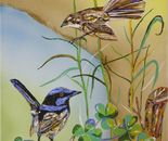 Fairy- wrens