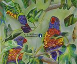 Rainbow Lorikeet in Fig tree