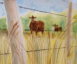Fenced Cows