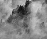 Fog over the pine trees #3