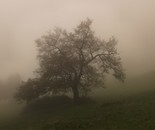 in the fog #16