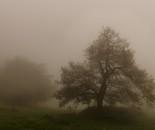 In the fog #24