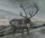 Deer hills
