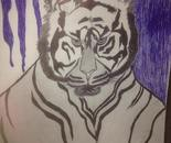 Tiger photoshoot