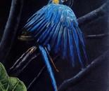 Blue splendour