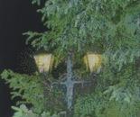 Golden Lanterns