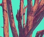 Burnt Tree