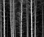 Beckoning Forest