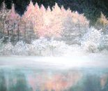 Splendour of Winter