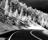 Pine Edged Road