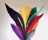 Rio De' Colores #47 -19