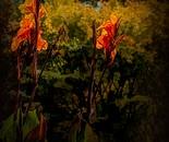 Late Autumn Flower
