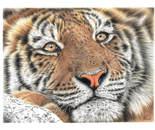 Chillin' Tiger