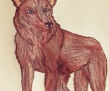 Spirit of the Coyote