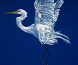 White heron on blue velvet