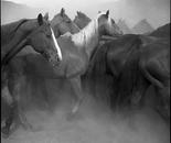 Remuda, Spanish Ranch