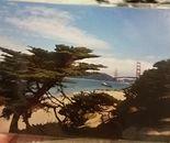 Golden Gate Summer