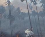 detail singing in the smoke