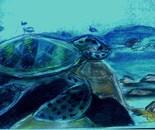 Sea Turtle Bahamas