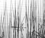 Reed Study 2