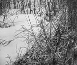 Snow Currents I