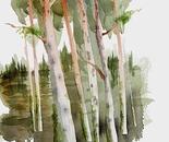 Heeland Pines