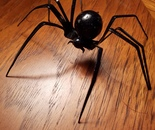 Iridescent Black Widow Spider