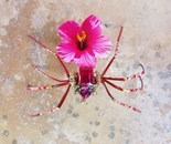Bejeweled Spider #52