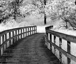 Boardwalk to Woods