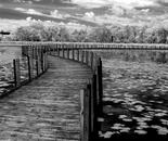 Curving Boardwalk
