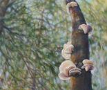 Polypore Fungi