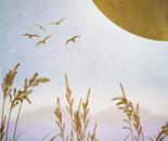 Golden Grass on Moon