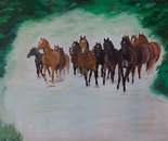 Herd of horses in canter