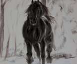 Friesan horse in winter