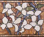 Ontario White Trillium