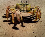 Crab (2016)