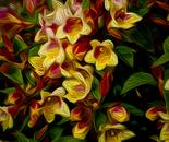 Abelia Bouquet