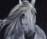 White horse portrait on black velvet