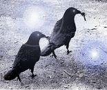 The Crow Couple