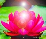 Red Glowing Lotus