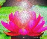 Red Lotus O1